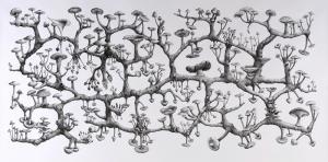 Richard Giblett, Mycelium Rhizome, 2009 Pencil on paper, 120 x 240 cm Source : http://aymed.files.wordpress.com/2011/12/richard-giblett-mycelium-rhizome.jpg